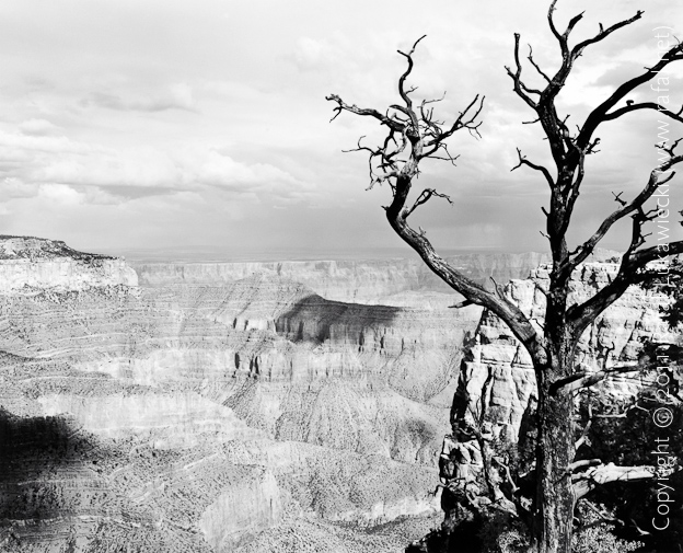 Sentinel Tree at Cape Royal, Grand Canyon