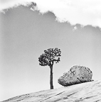 Tree and Rock at Olmstead Point, Yosemite